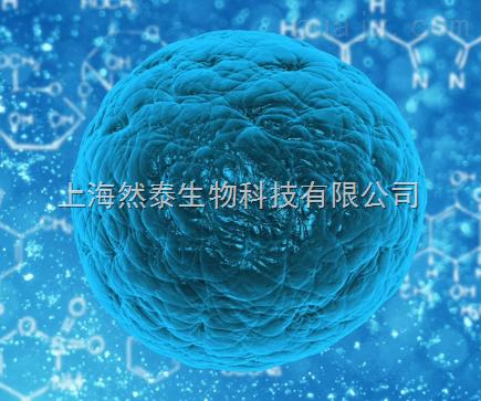 S-290-3细胞 S-290-3细胞